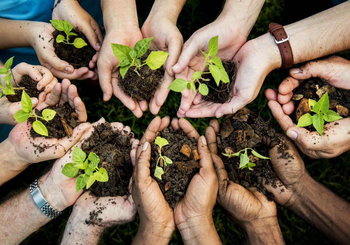 Haende mit Pflanzen - Wachstum
