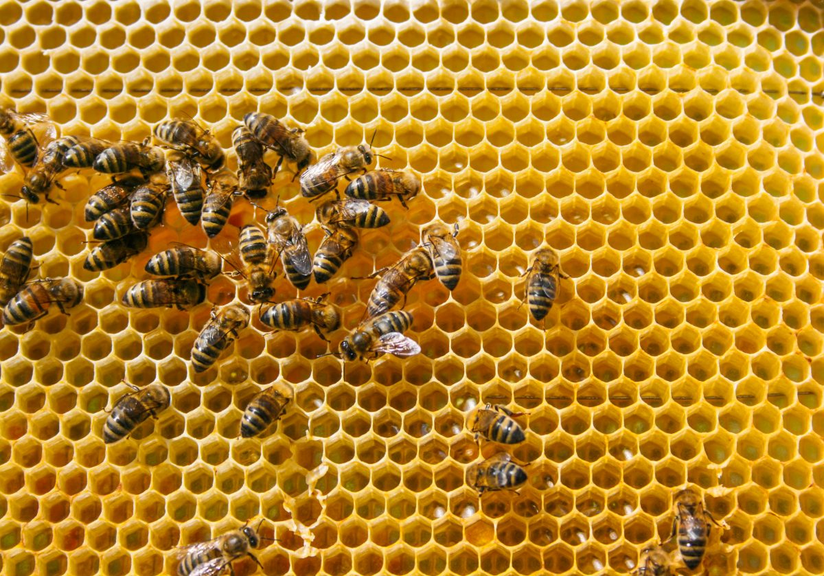 Bienen auf Waben - Agile Führung zur Selbstorganisation- Campus O.